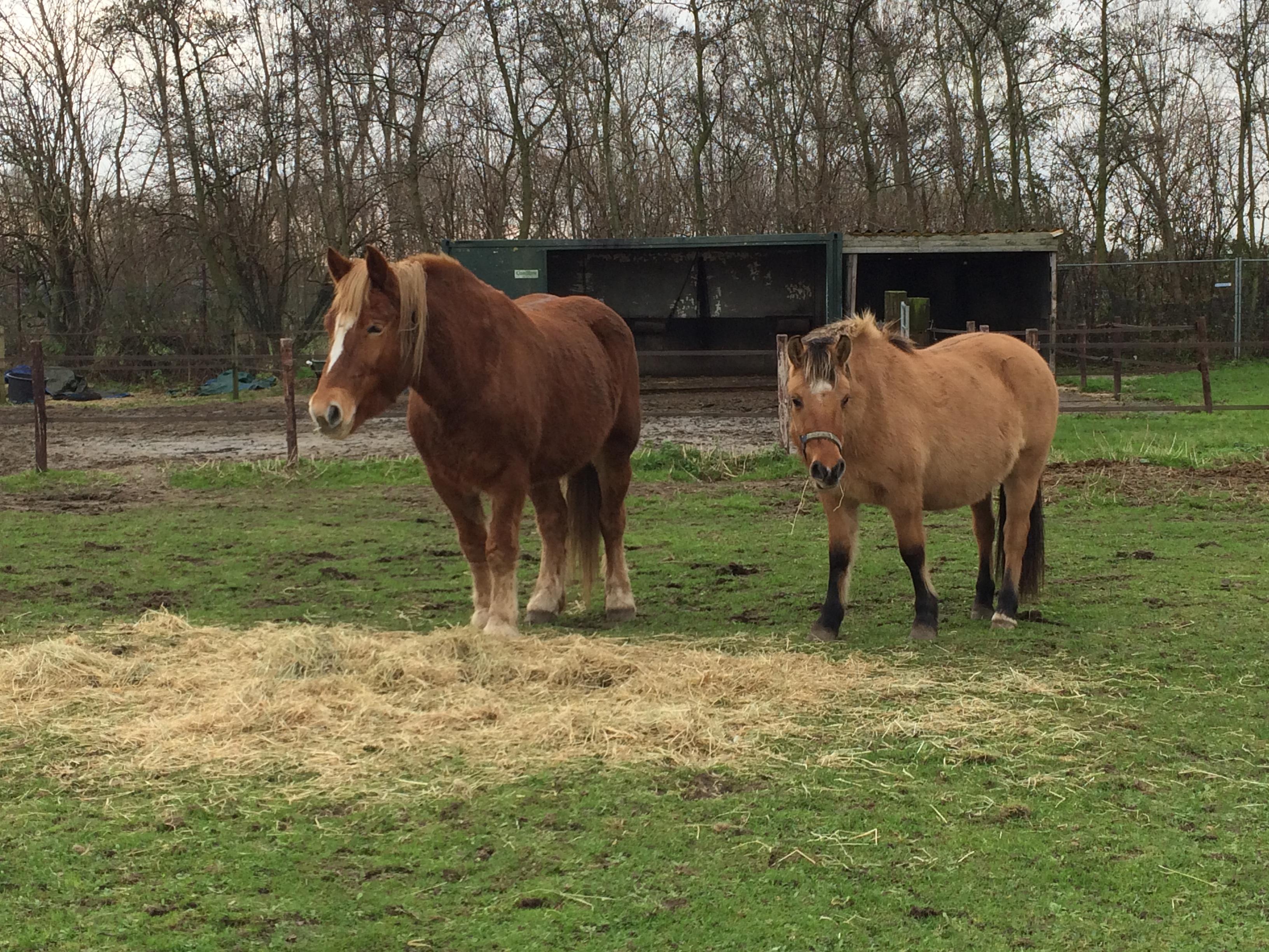 kerst clinic paard